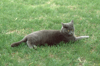 Annandale - Fifi Relaxing in Yard (1978)