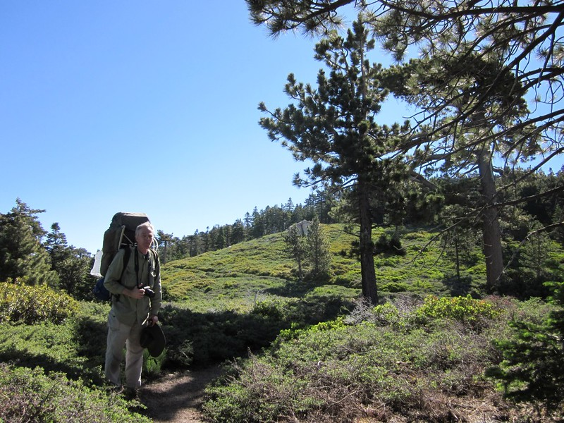 San Bernardino Peak Trail - Chaparral on the ridge top