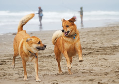 Photograph: Romping on the Beach