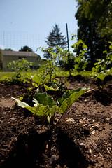 Presbyterian New England Soup Kitchen Garden