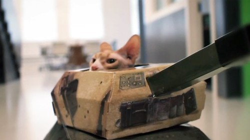 Cats in Tanks on Vimeo by Whitehouse Post