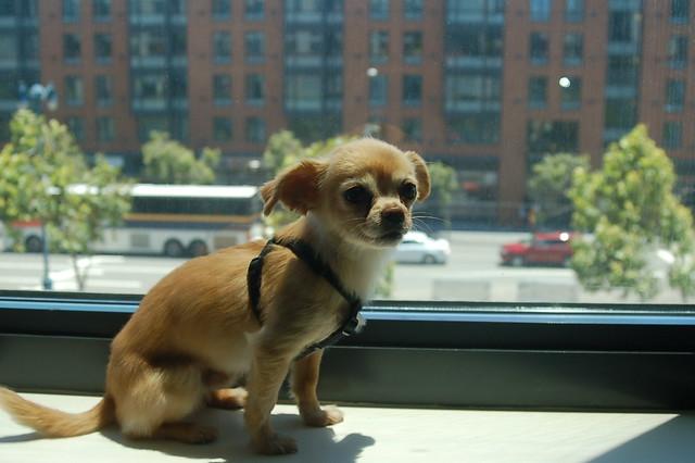 Header of o-dog