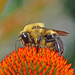 "nikon d5100 no-crop macro photography: ""there will bee an answer, let it bee........."" --------- viewed 2,443x"
