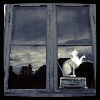 Image of  Åkeshovs slott. window cat square blackwhite squareformat gotham katt svartvit fönster åkeshov iphoneography instagramapp uploaded:by=instagram foursquare:venue=4c776ac9b4b4b60cb3b1270e