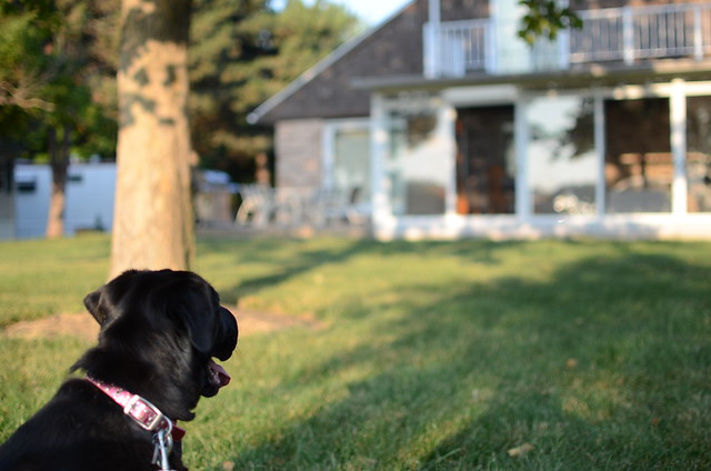 Pet Friendly Homes To Rent In The Myrtle Beach Area
