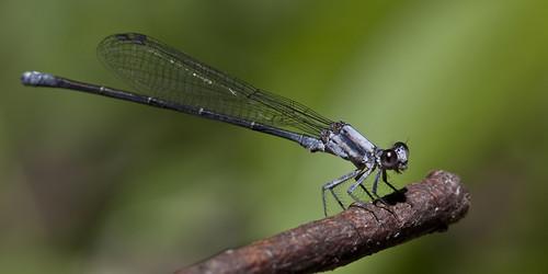 insect nj 2011 wawayandastatepark kh0831