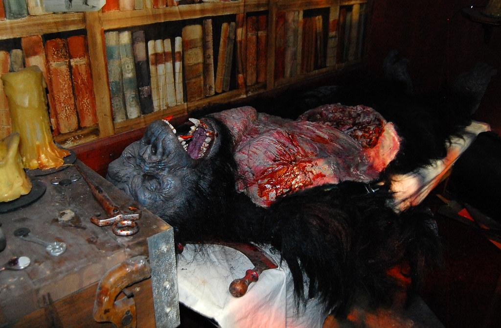 6013138032 40671dda8b b HHN 19: Anatomy of a Gorilla