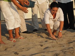 Baby turtles hatched in Mexico