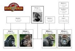 Gorilla Family - Beekse Bergen (Version 1)