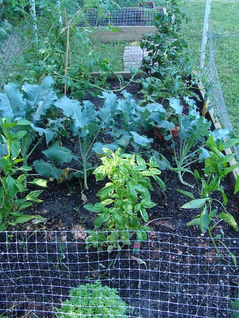 Veggies (6-29-11)