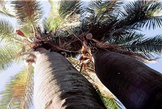 Palmares de  Ocoa - Chile