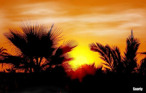 Location: Antalya Today's temperature + 41 degree in shade.. MEDITERRANEAN SUNSET THROUGH PALMS ☼☼ ☼☼☼☼