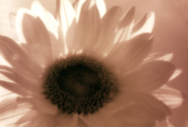 Sunflowers Infrared Pinhole 850nm - Nikon DSLR