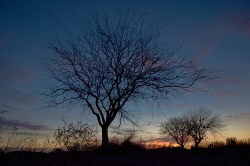 Autor: mundo matungo (rafa ontiveros)