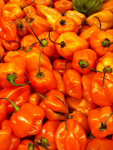 Habanero Peppers - Burn Baby Burn!