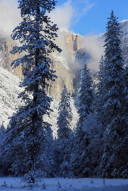 IMG_4969 Winter Morning, Yosemite National Park