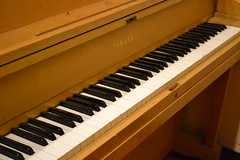 celesta, piano, musical keyboard, keyboard, pianet, spinet, music workstation, electric piano, player piano,