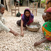 Garlic Harvest Sorting - Hatiandha, Bangladesh