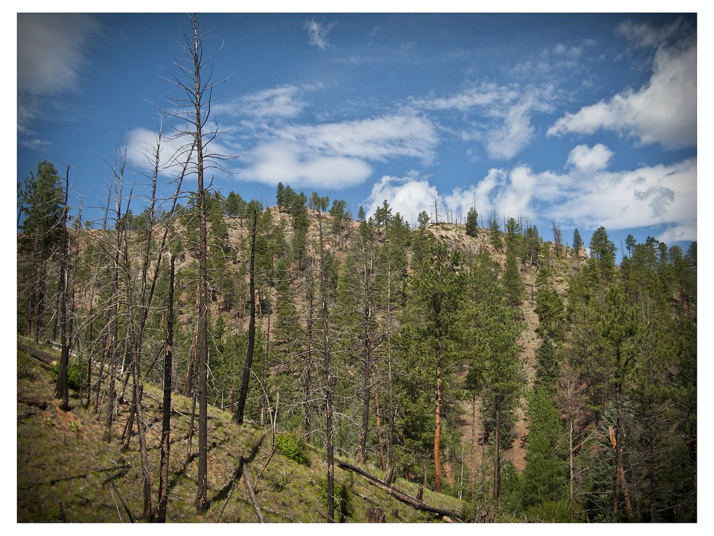 Elevation of Conifer Mountain Rd, Conifer, CO, USA ...