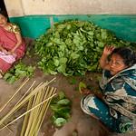 Stacking Betel Leaves in Khashia Village - Srimongal, Bangladesh