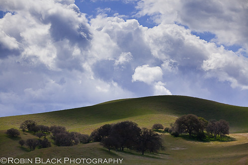 Spring, Pozo HIlls (Los Padres National Forest, California)