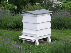 pollinator(0.0), animal(0.0), insect(0.0), membrane-winged insect(0.0), beekeeper(0.0), bee(0.0), apiary(1.0), beehive(1.0),