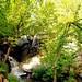 Série chutes du Lac Rolland, parc La Vérendrye 1