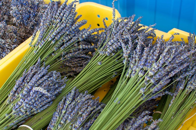 Krause Berry Farms lavender