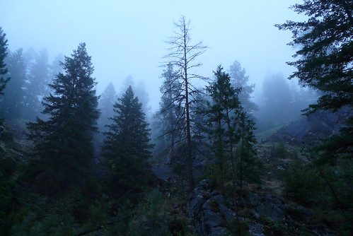 morning vacation mountain fog pine forest washington curlew ferrycounty