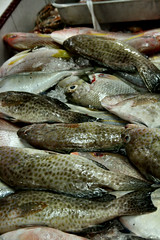 animal, trout, fish, fish, seafood, oily fish, food, shishamo,