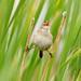 Birds of Coyote Hills - 10
