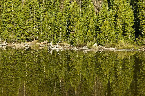 morning trees summer usa lake abstract mountains reflection tree green nature water sunrise canon landscape scenery colorado unitedstates natural shoreline scenic telephoto tamron pinetrees 70300 highway14 chamberslake cameronpass larimercounty t2i canont2i tamronaf70300mmf4056spdivcusdxld