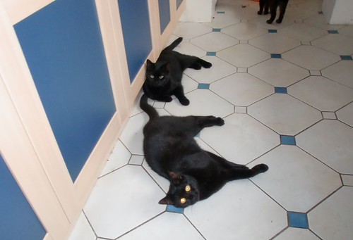 Blackies in the kitchen (4)