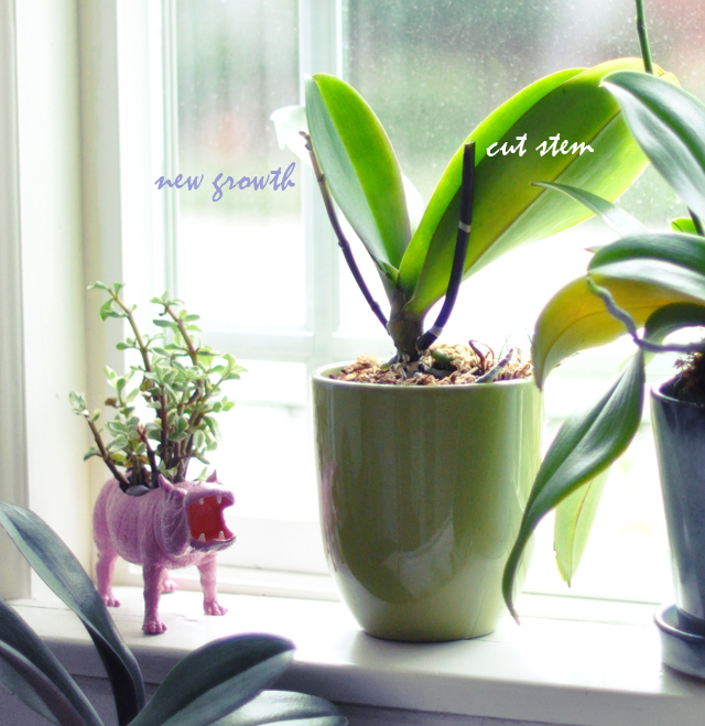 How i re grew my orchids love maegan How do you care for orchids after they bloom