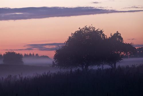 mist tree sweden dusk meadow sverige östergötland brokind sigma70300mmf456apodgmacro canoneos7d ginordicoct