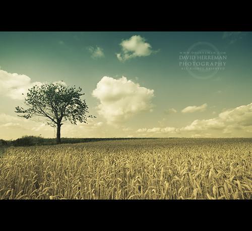 tree field clouds canon angle belgium belgique wide belgië sigma 7d été nuages tones 1020 arbre champ wallonie 2011 hainaut pontàcelles rosseignies obaix davidherreman hériamont