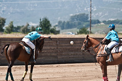 western riding(0.0), racing(0.0), endurance riding(0.0), horse trainer(0.0), animal sports(1.0), equestrian sport(1.0), sports(1.0), race(1.0), polo(1.0), horse(1.0), jockey(1.0),