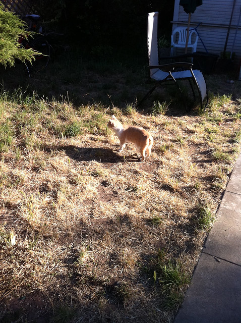 Walks in SJB