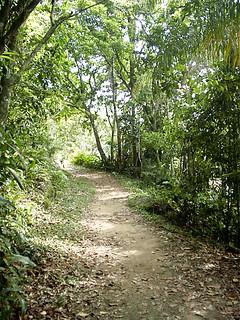 Vamos caminhar por uma trilha?