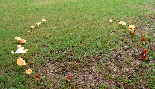 Fairy Ring in a lawn