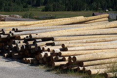fence(0.0), wall(0.0), logging(1.0), wood(1.0), tree(1.0), lumber(1.0),