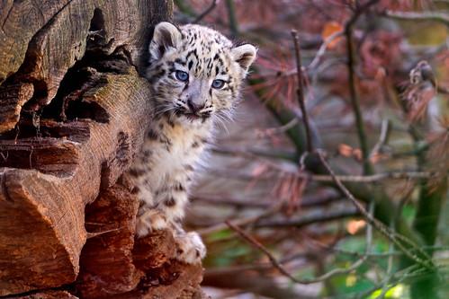Cub and wood