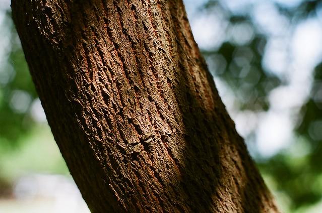 樹幹的紋理 | Flickr - Photo Sharing!
