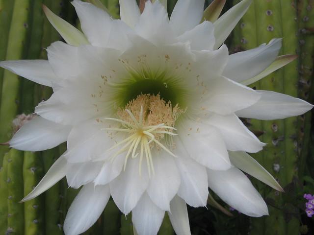 Fotos Fantásticas de flores (4) - a gallery on Flickr