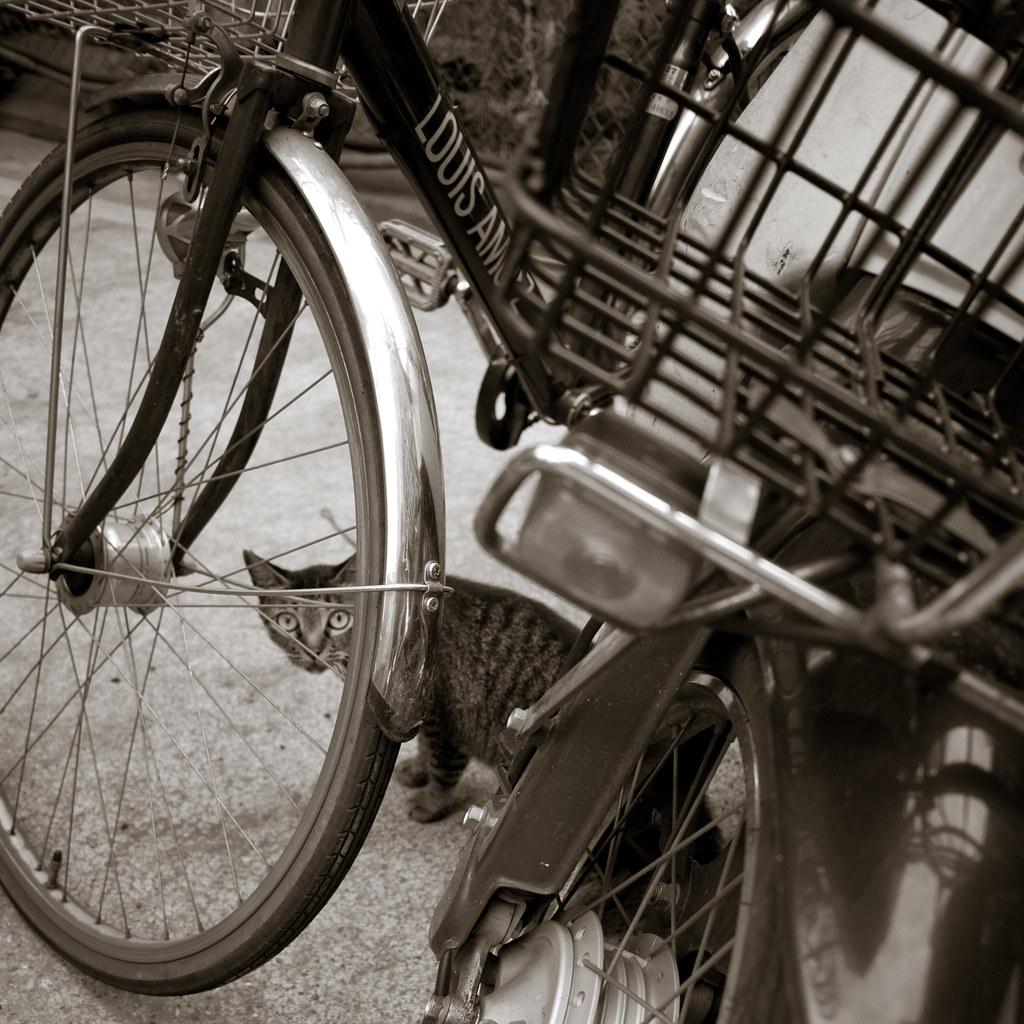 自転車に隠れる猫 2011/07/26 P1050845