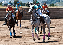 western riding(0.0), eventing(0.0), endurance riding(0.0), animal sports(1.0), equestrianism(1.0), equestrian sport(1.0), sports(1.0), polo(1.0), jockey(1.0),