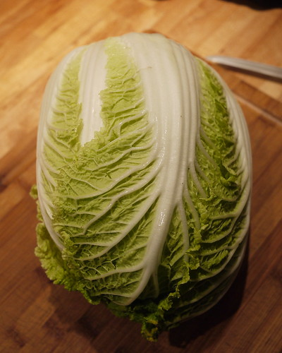 Napa cabbage for kimchee
