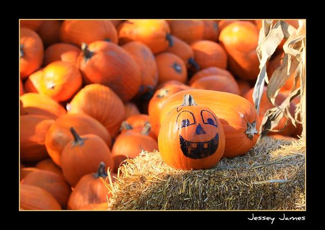 Pumpkin Season is upon us!