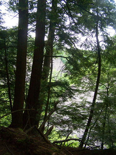 trees forest gulf state hill more views tug tughill blocking andyarthur