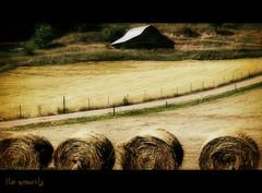 Rural farm.